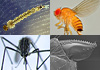 Facing the invasion of alien arthropods species