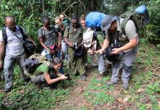LA BIODIVERSITÀ DELLE FORESTE TROPICALI
