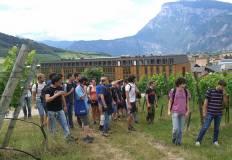 studenti tra le vigne
