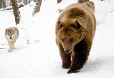 Toponimi e presenza di orsi e lupi: quale relazione?